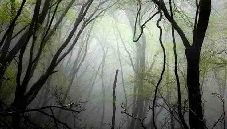 el bosque dorado-fotografía-caf